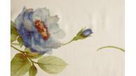 01023 PASTEL coloris 0003 IVOIRE BLEU dessin 3936